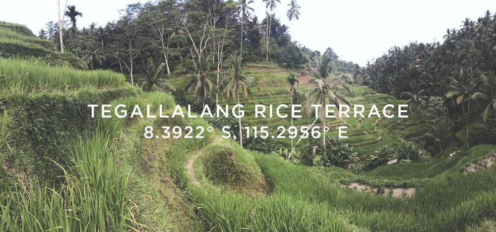 tegallalang-Rice-Terrace - hobo-world-bali-