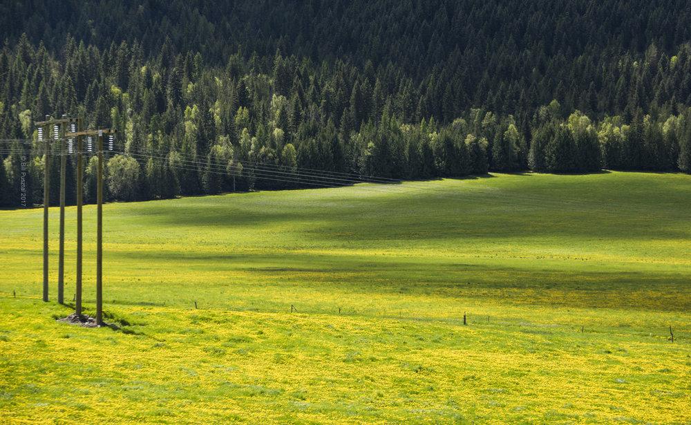 Peak Dandelion, near Cherryville BC, Canada.