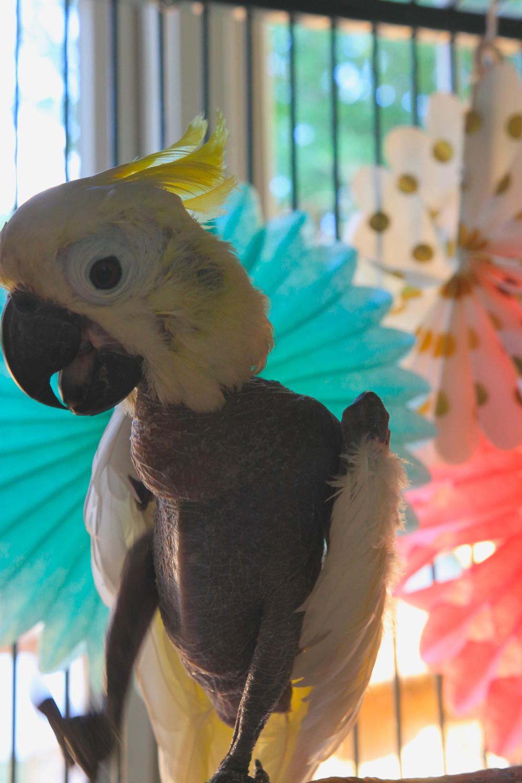 parrot enrichment parrot foraging