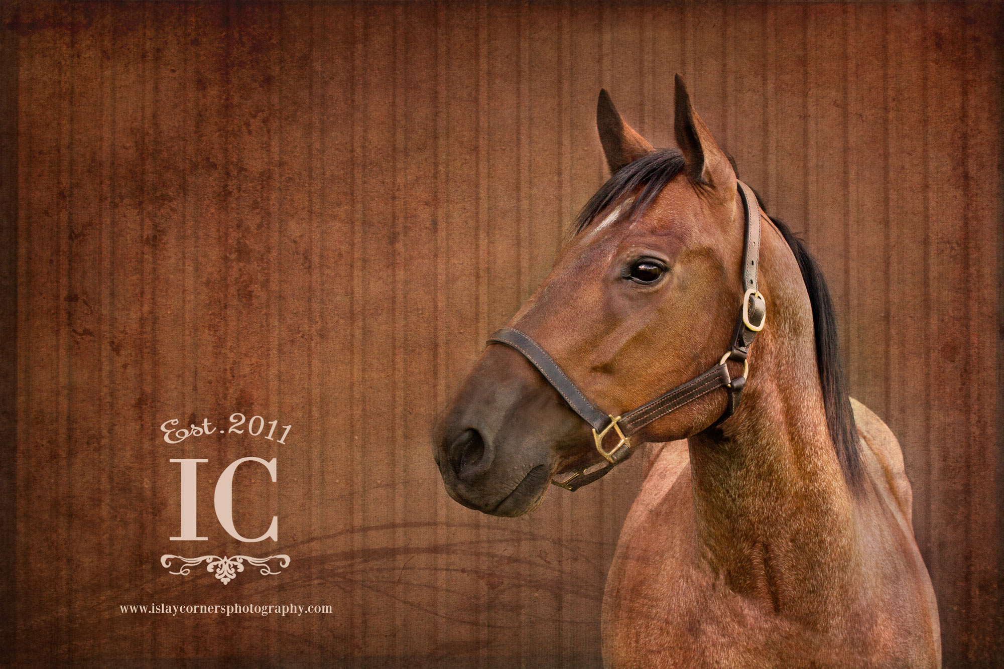 J and J Wichita Pet Photography Fine Art Horse Photography