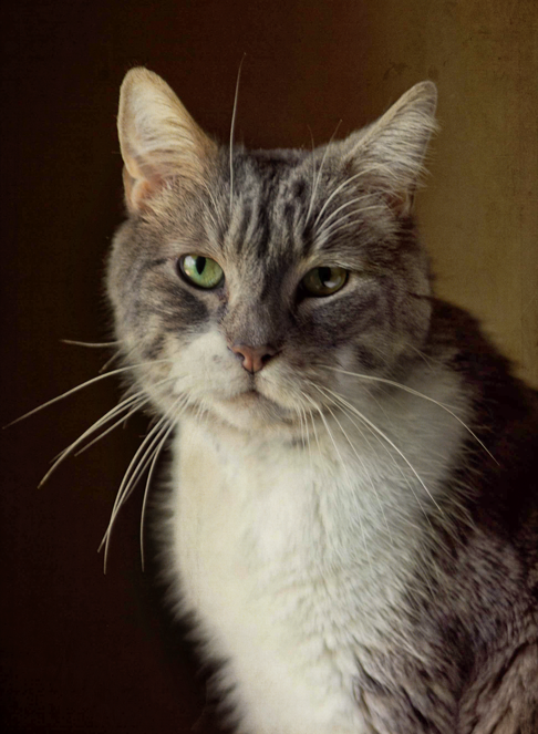 Gryffin-Cat-Wichita-Pet-Photography