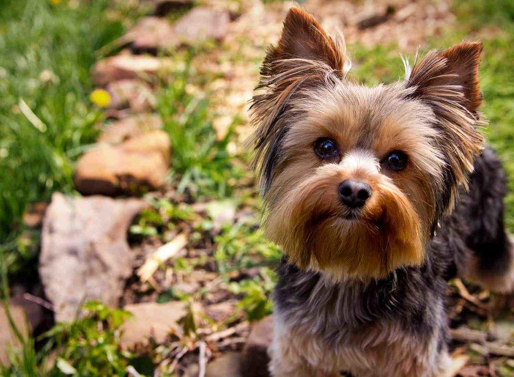 Dog Pet Photo Picture Wichita_0002.jpg
