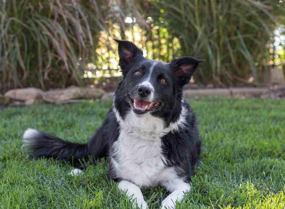 Dog Pet Photo Picture Wichita_0056.jpg