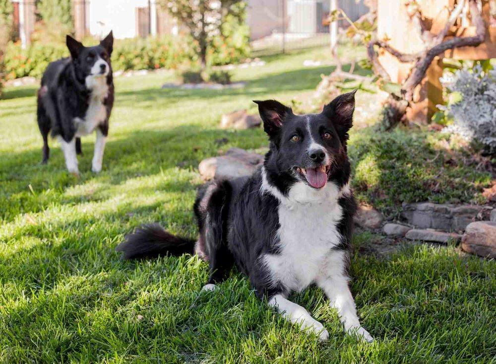 Dog Pet Photo Picture Wichita_0055.jpg