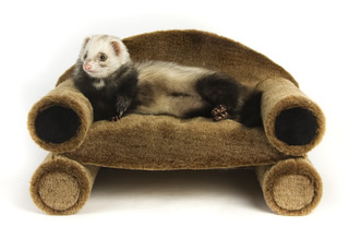 ferret-furniture1.jpg