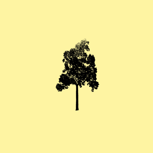 candor_tree.png