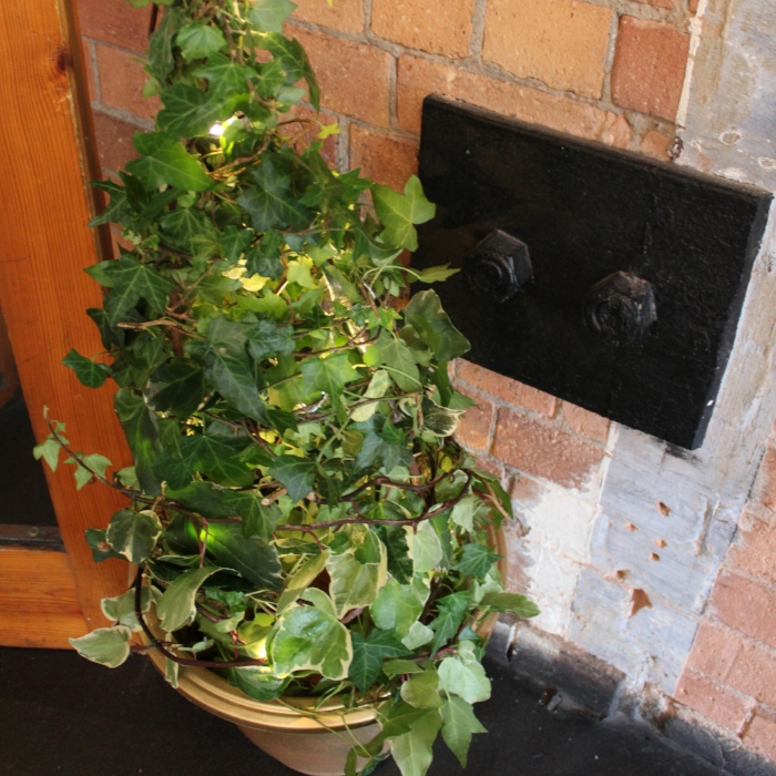 Ivy trees - Used for your entrance or sit either side of your cake or top table these trees with natural ivy and fairy lights are great at adding both height and light to your room.