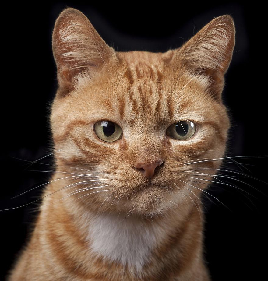 Skeptical-Cat.png