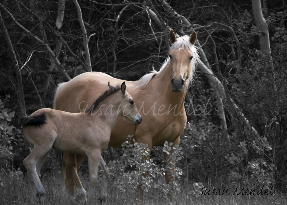 Stay Close     Free roaming mare and filly Limited Edition fine art print  premium matted and framed $700