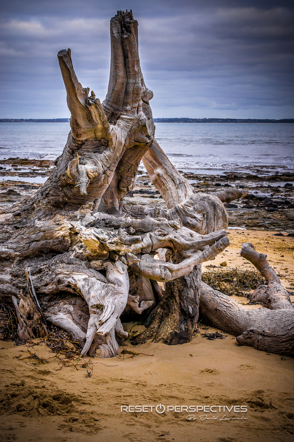 Driftwood at Somers Beach, Victoria