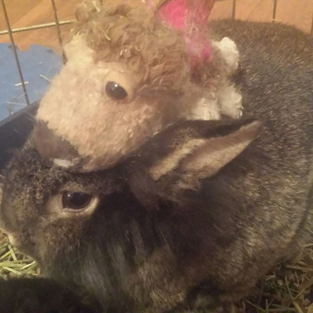 Here is a rabbit with a stuffed dog on his back.