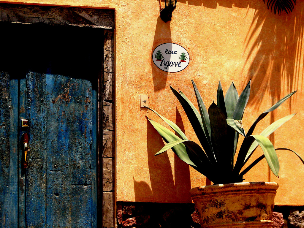 K I T T Y FINDS: TAKE ME THERE  Puerto Vallarta, Jalisco, Mexico
