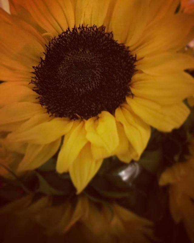 #sunshineonacloudyday #gratefulheart 💗🌻