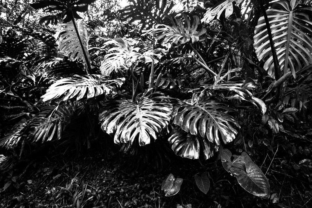Maui2015_5043-2.jpg