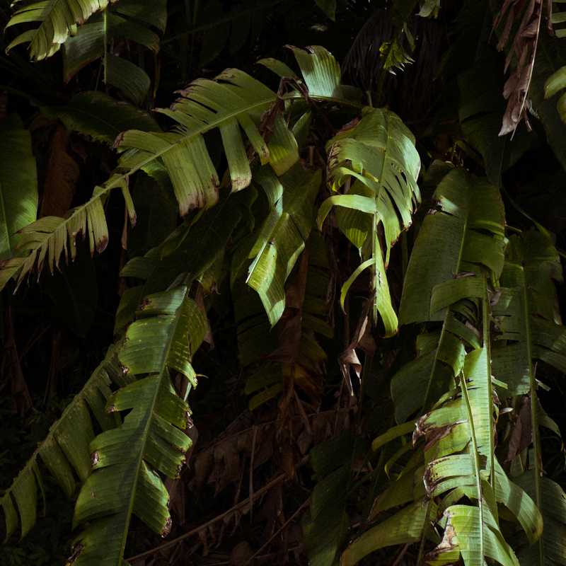 Kauai_8840.jpg