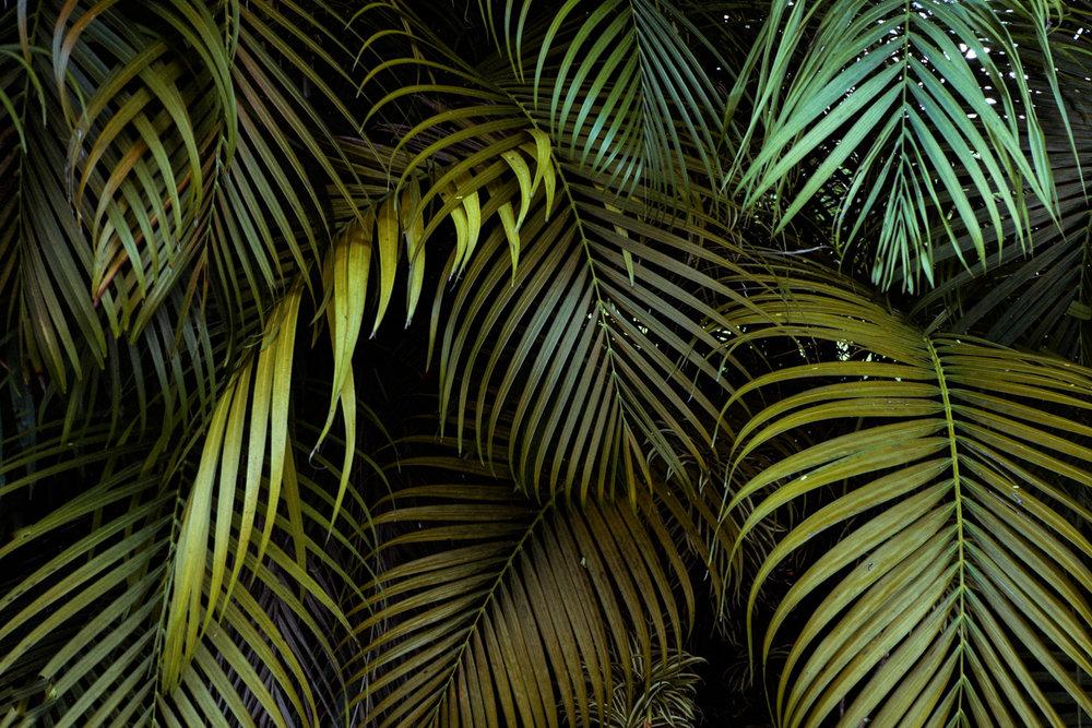 Kauai_8846.jpg