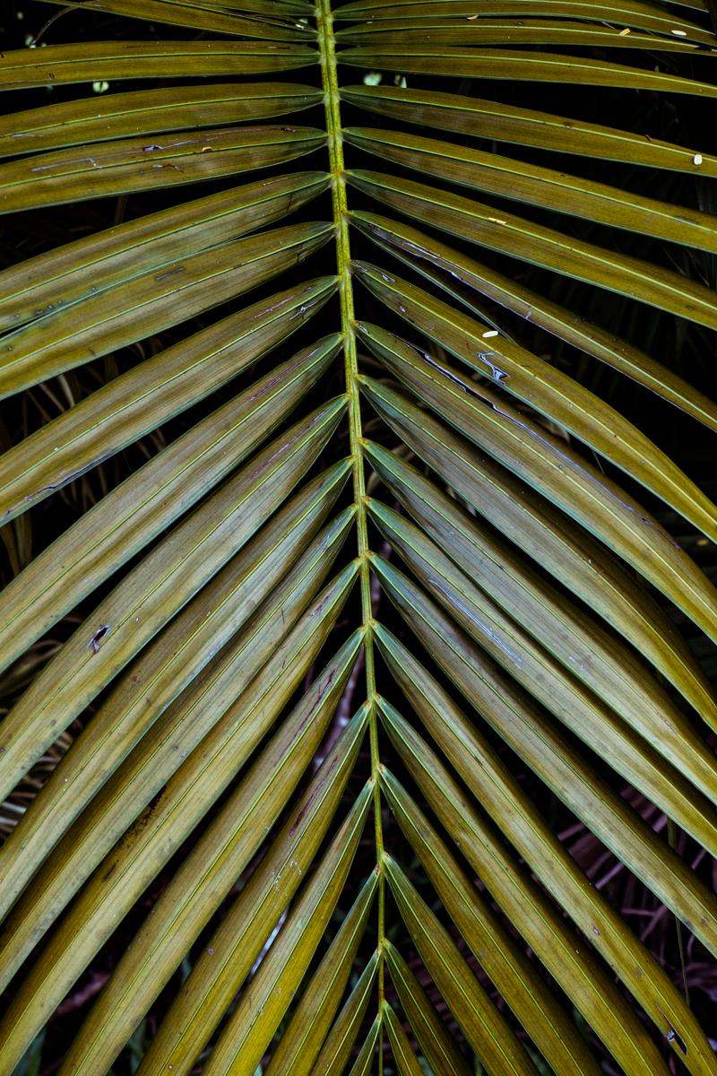 Kauai_8849.jpg