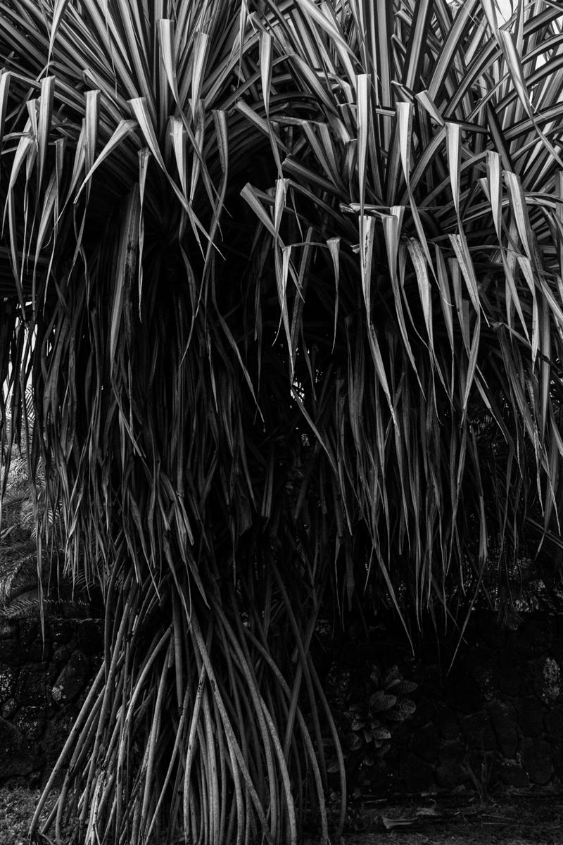 Kauai_8841.jpg