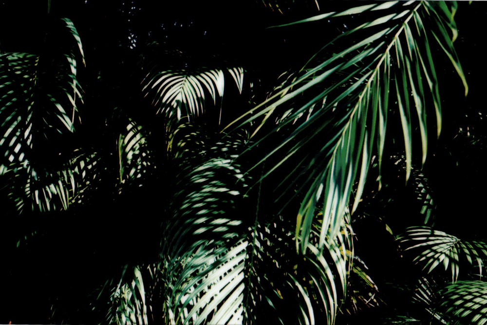 PR Palm Polaroid-3 copy.jpg
