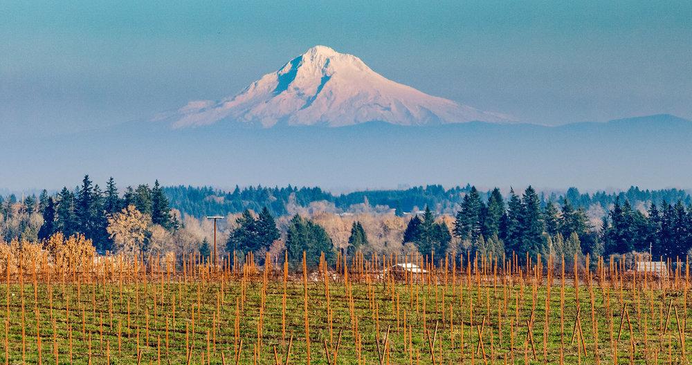 LF Mt. Hood_Winter Vines.jpg