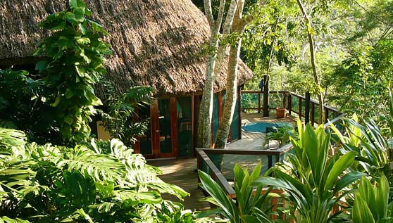 belize-treetop-houses-suites-chaa-creek-luxury-resort-home-accom.jpg
