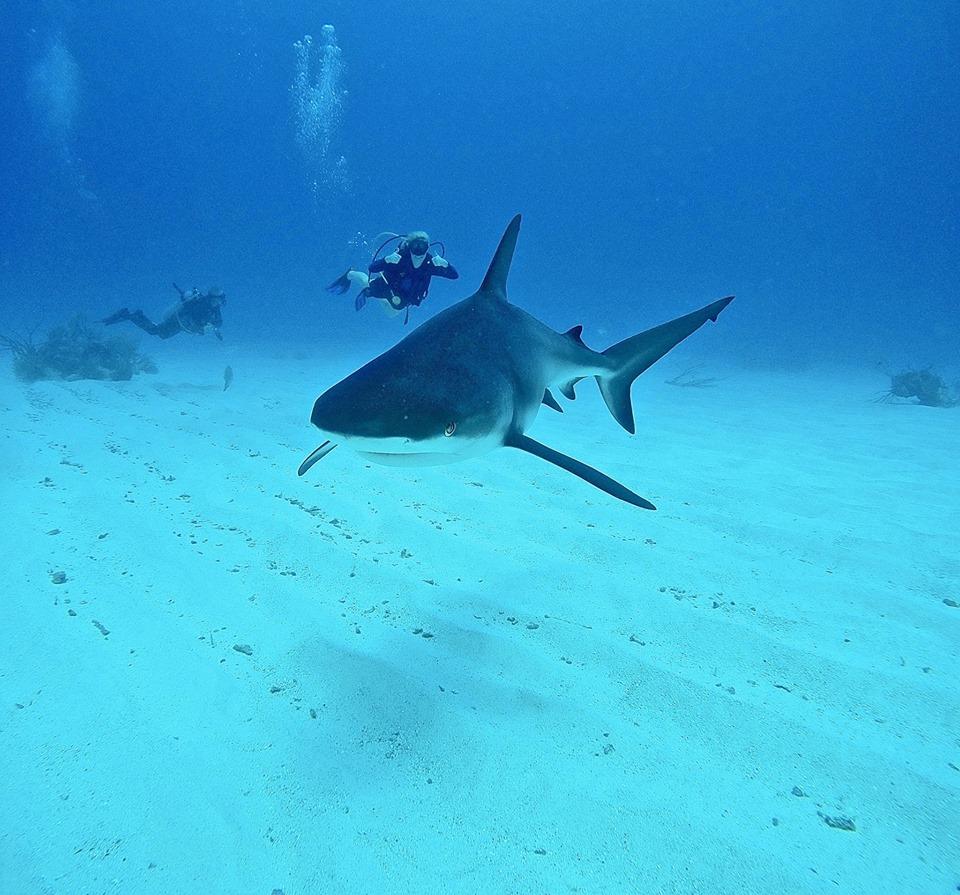 Diving_Cayman