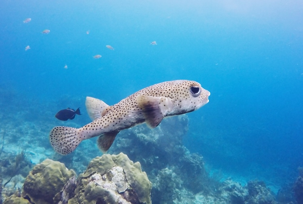 Little Cayman_diving
