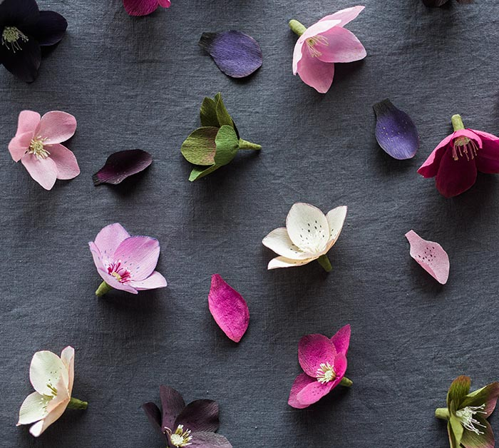 hellebores photo by Grace Kim