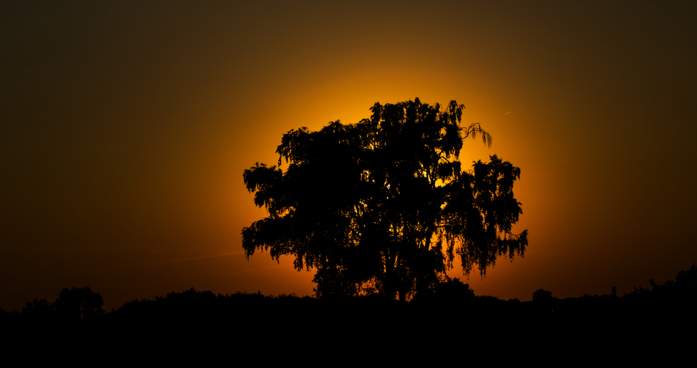 sundowner_2.jpg