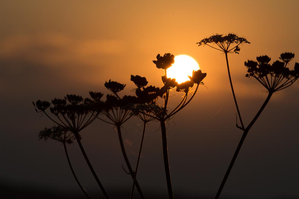 sundowner_eydo.jpg