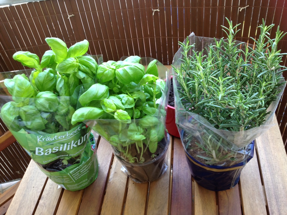 Herbs for the Garden - Savannah Page
