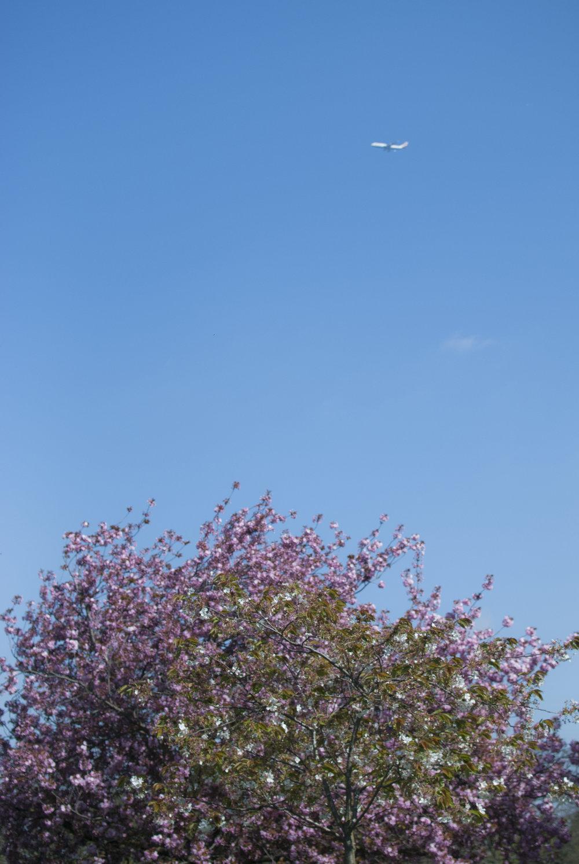 London sky in springtime