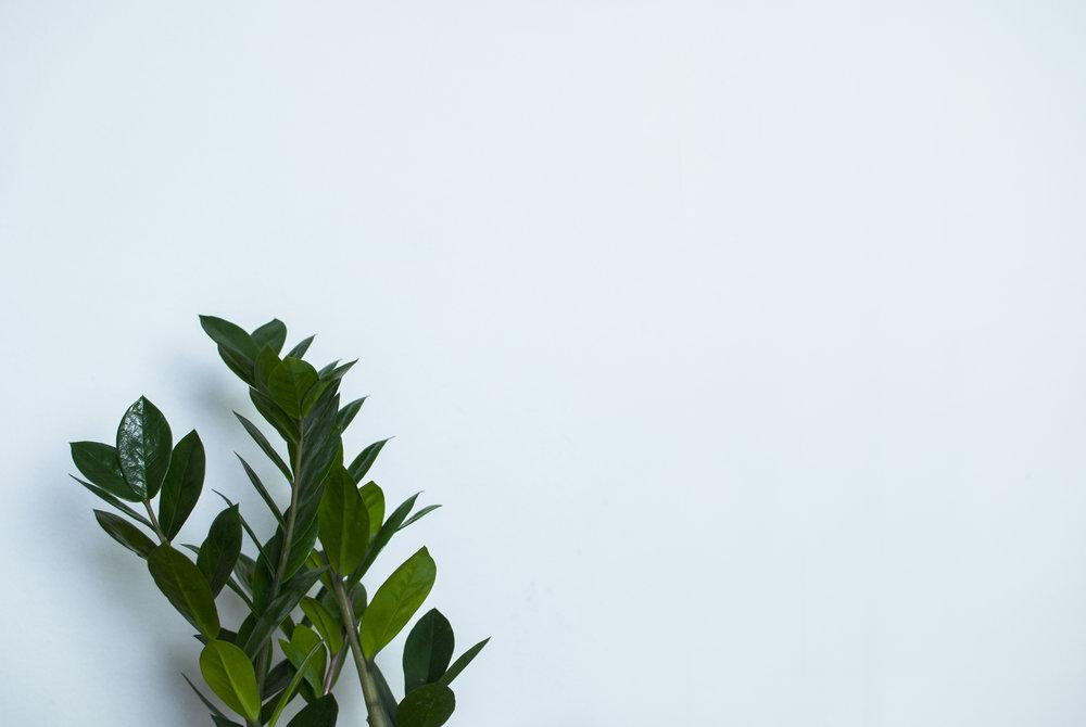Minimal house plants