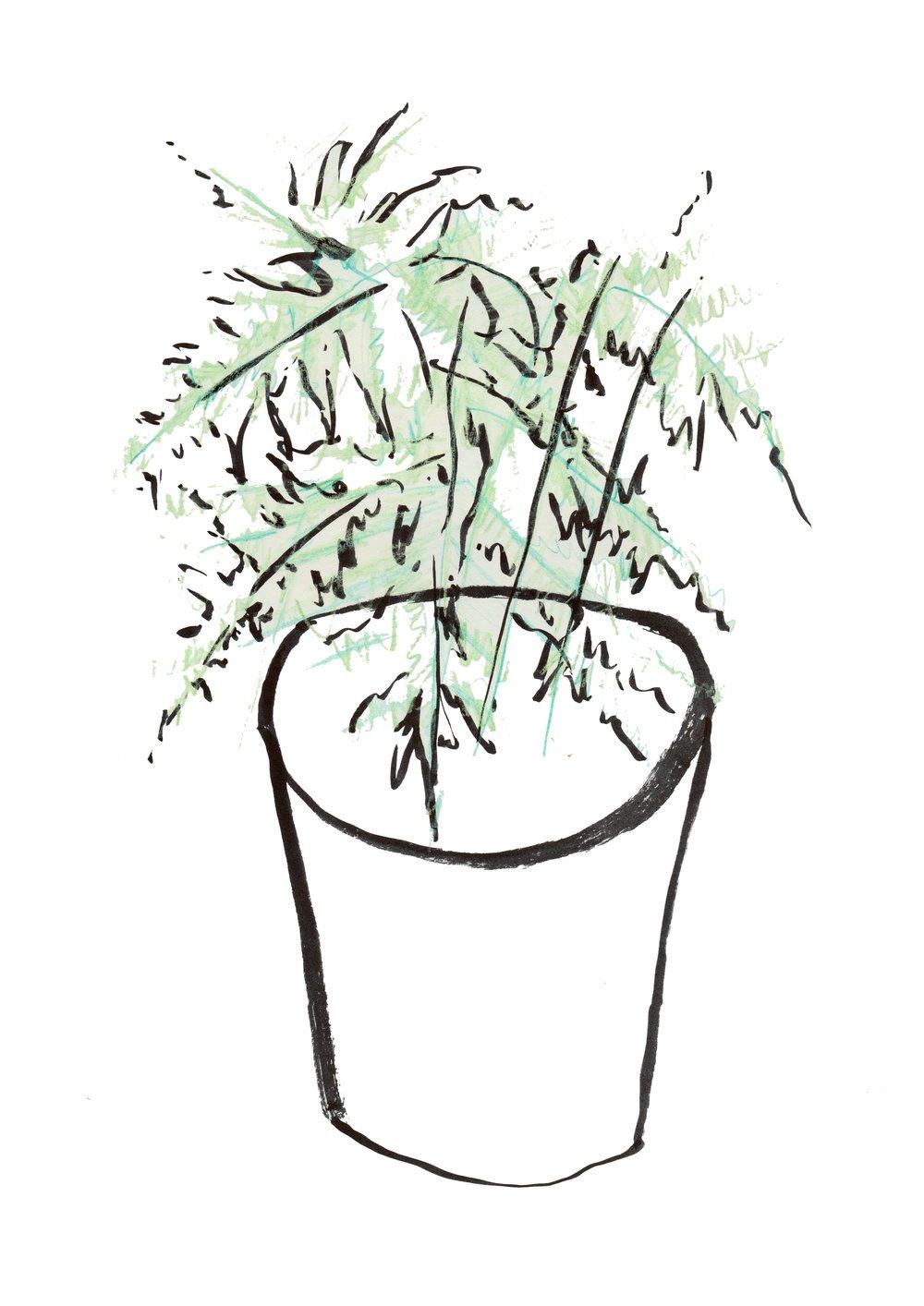 Asparagus Fern  by Gemma Hampton