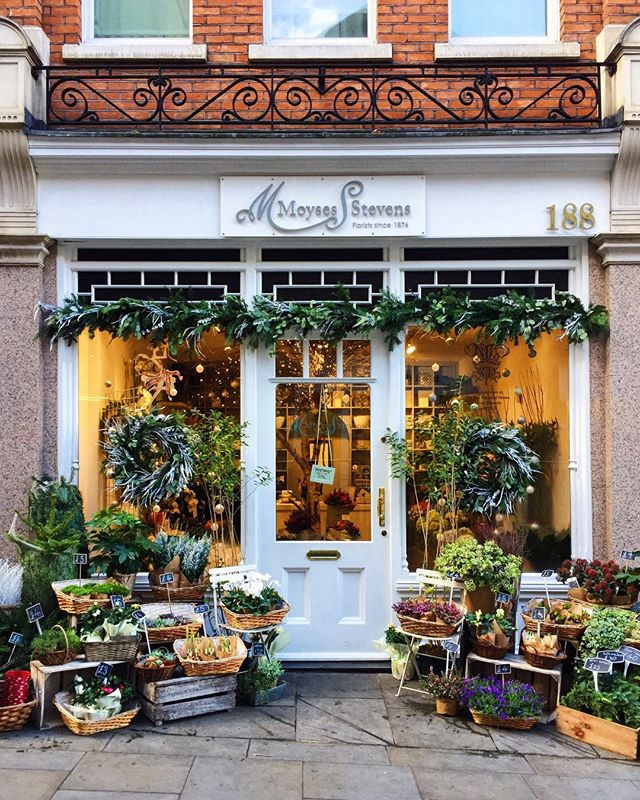 Charming Chelsea . . . #chelsea #chelsealondon #florist #christmasflorist #christmasflowers #christmasshop #christmaslondon #londondoors #shopfront #christmaswreath #garland @toplondonphoto @metro.co.uk @theresidentlondon @london @moysesstevens