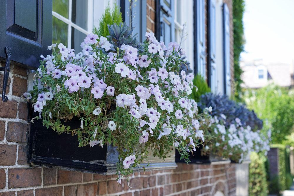 Charleston_South Carolina_window boxes.jpg