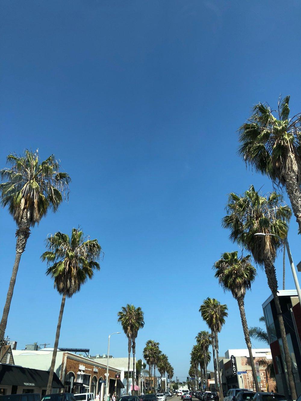 ashleyajones/palm.jpg