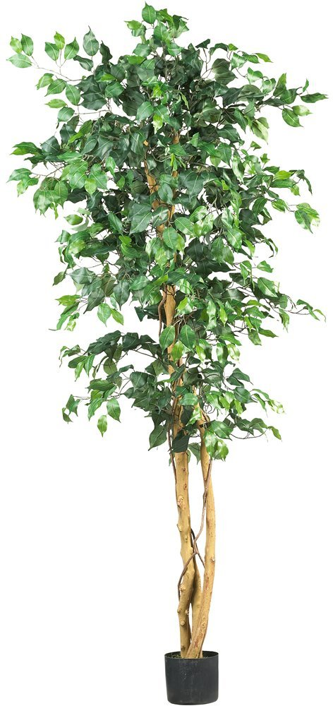 More Green - Want even more green? The Nature Ficus Tree is perfect for a larger nature view.