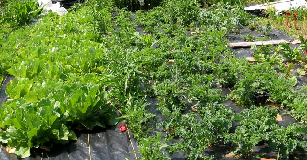 Organic gardening classes will help teach you to grow your own food.