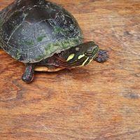 turtle water2.jpg