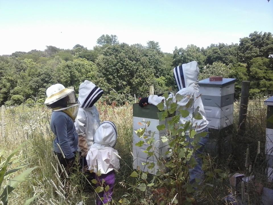 Interns at Fox Run Environmental Education Center learning about beekeeping - Photo by Ame Vanorio