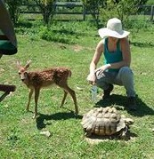 Intern Jessie with an abandoned African Spurred Tortoise and one of our fawn rescues. - Note the pyramiding of the shell. These bumps are caused by poor care. Tortoises have very specific care needs such as humidity and temperature requirements.