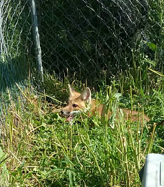 Wildlife Blog — Fox Run Environmental Education Center Blog