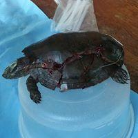 turtle rescue2.jpg