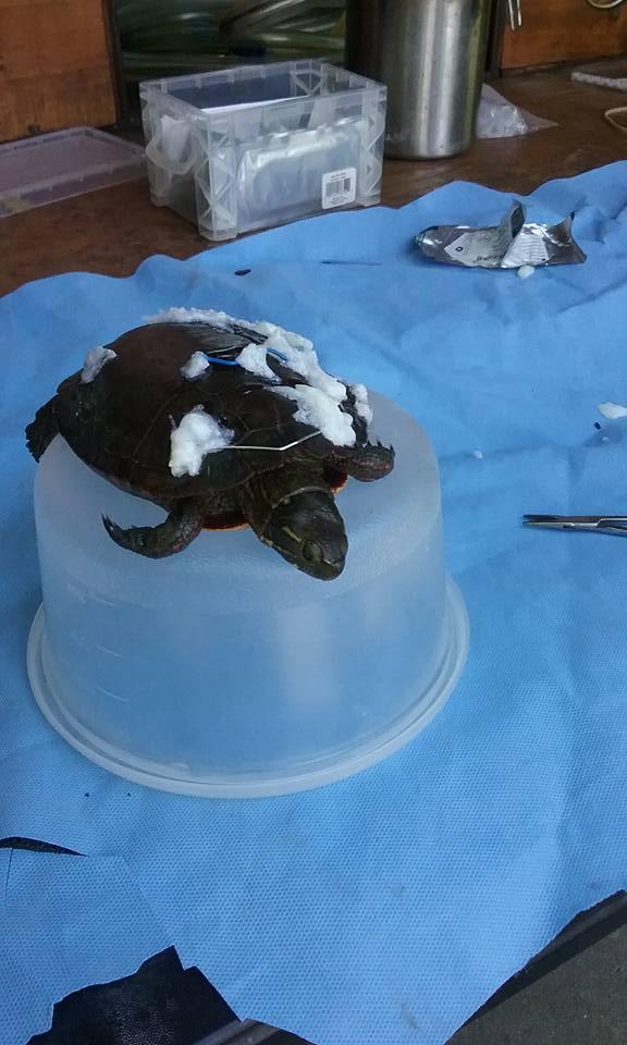 turtle rescue3.jpg