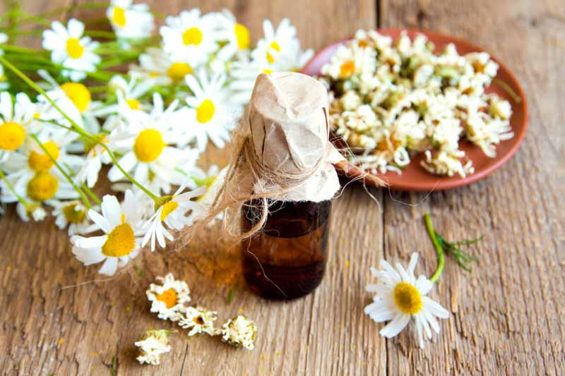Chamomile Essential Oil -