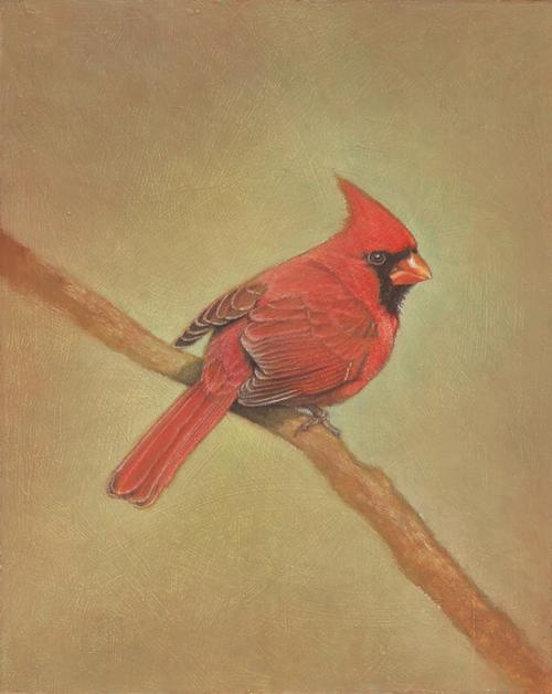 cardinalsm.jpg