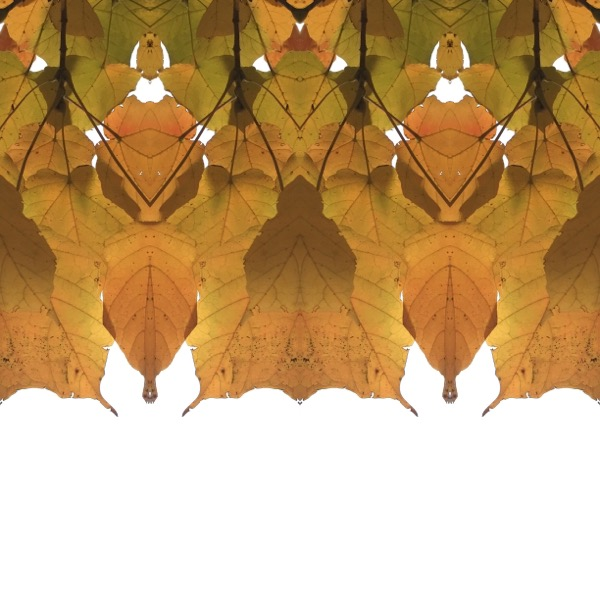 Leaf Series 2472-5.jpg