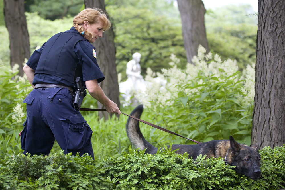 A police officer and her dog work the scene of a stabbing in the South Garden of the Art Institute of Chicago campus downtown Wednesday, June 10, 2015. A 50-year-old man was seriously injured after being stabbed in the neck and was taken to Northwestern Memorial Hospital. A person of interest was taken into custody, police said. (Erin Hooley/Chicago Tribune)