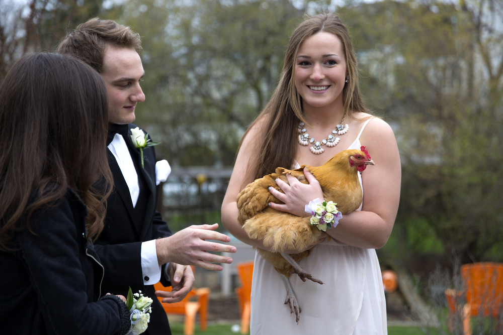 Jacqui Gossard holds a chicken at the home of her friend Fisher Katlin, left, in Northfield, as they prepare to go to New Trier High School prom Saturday, April 25, 2015. (Erin Hooley/Chicago Tribune)